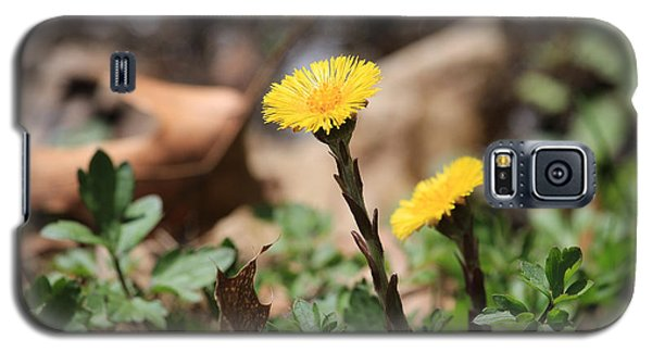 Coltsfoot Galaxy S5 Case