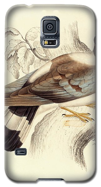 Columba Leuconota, Snow Pigeon Galaxy S5 Case by Elizabeth Gould