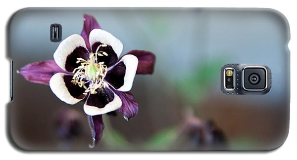 Galaxy S5 Case featuring the photograph Columbine by Erin Kohlenberg