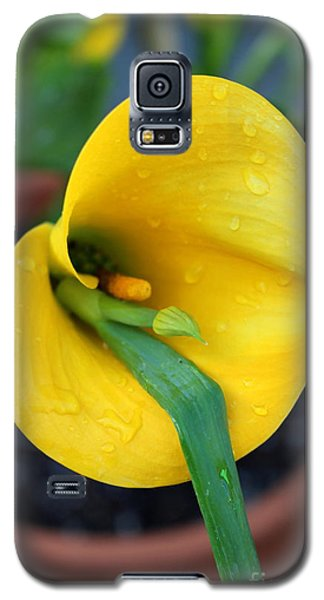 Come Out Come Out Galaxy S5 Case