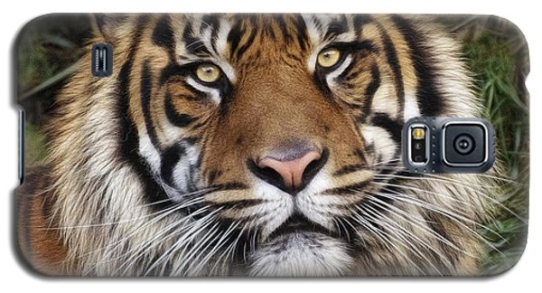 Come Pet Me Galaxy S5 Case