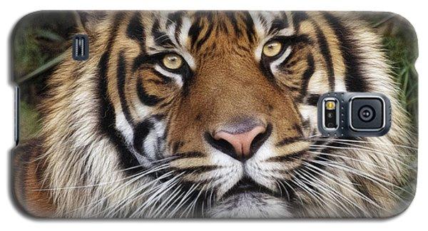 Come Pet Me Galaxy S5 Case