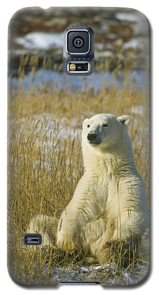 Comfortable Polar Bear Galaxy S5 Case