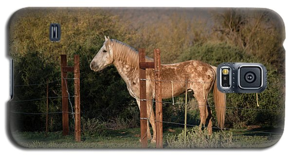 Coming Through The Fence Galaxy S5 Case