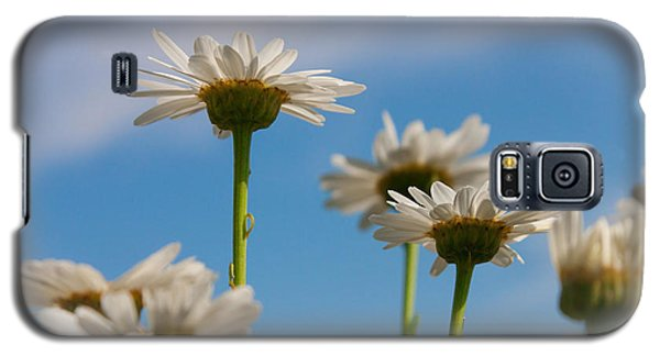 Galaxy S5 Case featuring the photograph Coming Up Daisies by Christina Lihani