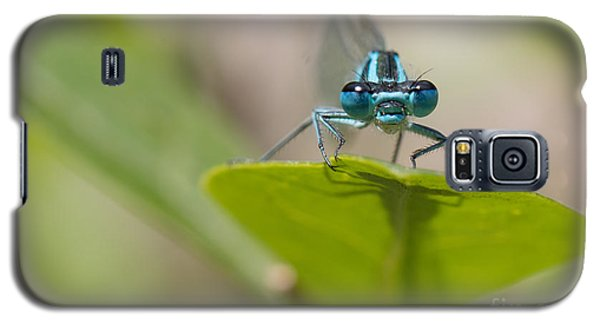 Common Blue Damselfly Galaxy S5 Case by Jivko Nakev