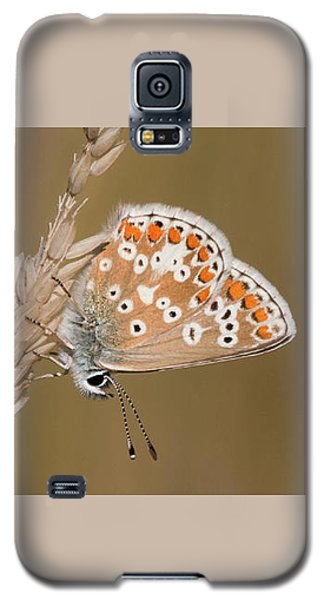 Common Blue Roosting Galaxy S5 Case