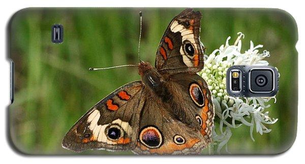 Common Buckeye Butterfly On Wildflower Galaxy S5 Case