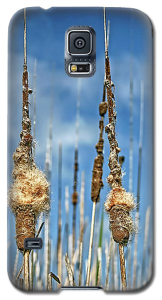 Common Cattail Seeds Galaxy S5 Case