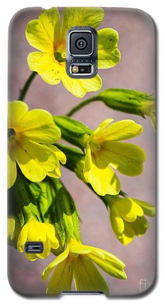 Common Cowslip In The Morning Sunlight Galaxy S5 Case