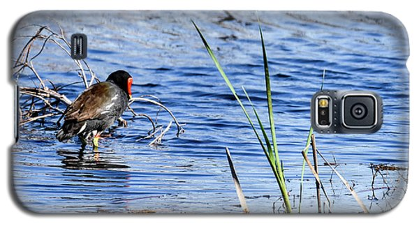 Galaxy S5 Case featuring the photograph Common Gallinule by Gary Wightman