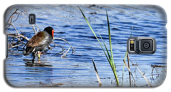 Common Gallinule Galaxy S5 Case