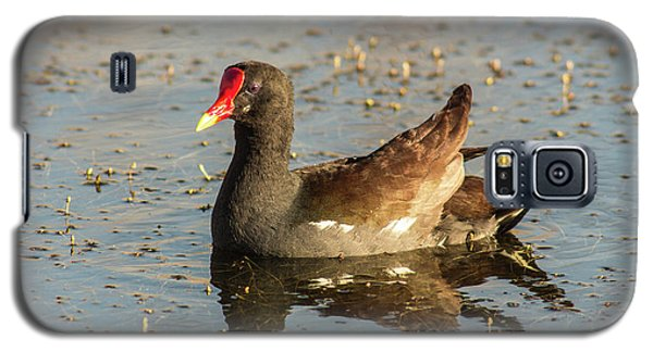 Galaxy S5 Case featuring the photograph Common Gallinule by Robert Frederick