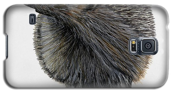 Common Hedgehog  Erinaceus Europaeus - Herisson D Europe - Erizo Galaxy S5 Case
