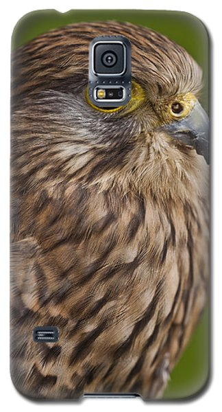 Common Kestrel Falco Tinnunculus Galaxy S5 Case