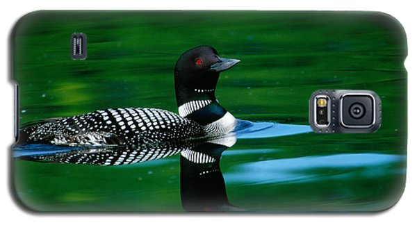 Common Loon In Water, Michigan, Usa Galaxy S5 Case by Panoramic Images