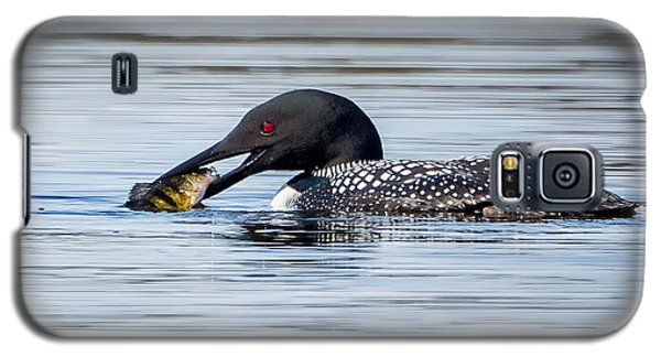 Common Loon Square Galaxy S5 Case by Bill Wakeley