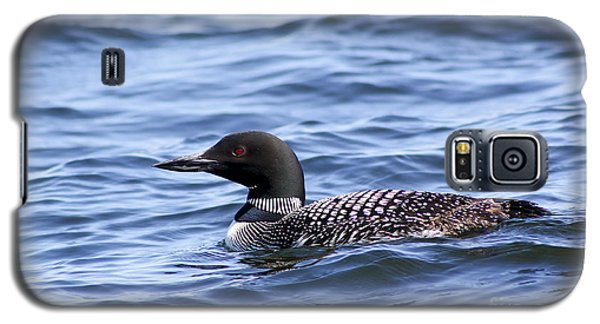 Loon Galaxy S5 Case - Common Loon by Teresa Zieba