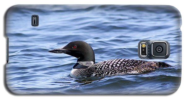 Common Loon Galaxy S5 Case by Teresa Zieba