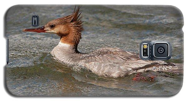 Common Merganser Galaxy S5 Case