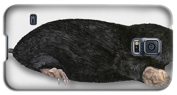 Common Mole Talpa Europaea Galaxy S5 Case