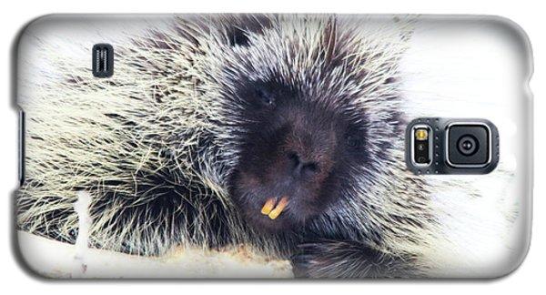 Common Porcupine Galaxy S5 Case