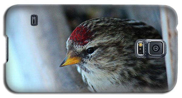 Common Redpoll Galaxy S5 Case