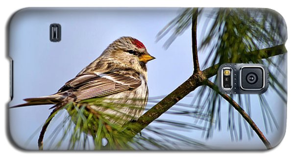 Galaxy S5 Case featuring the photograph Common Redpoll Bird by Christina Rollo