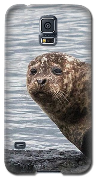 Common Seal Portrait Galaxy S5 Case