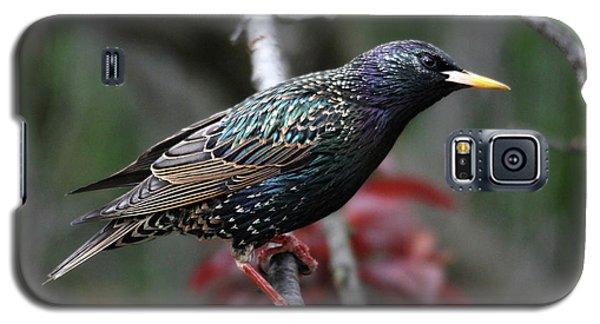 Common Starling Galaxy S5 Case