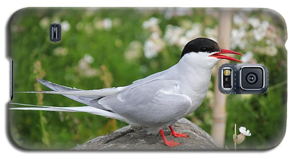 Galaxy S5 Case featuring the photograph Common Tern by David Grant