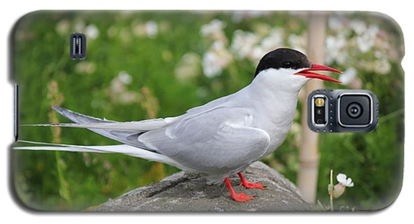 Common Tern Galaxy S5 Case