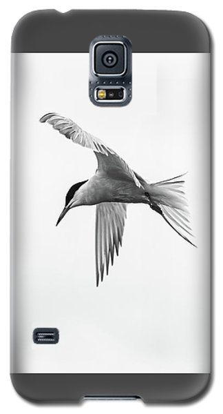 Common Tern Galaxy S5 Case