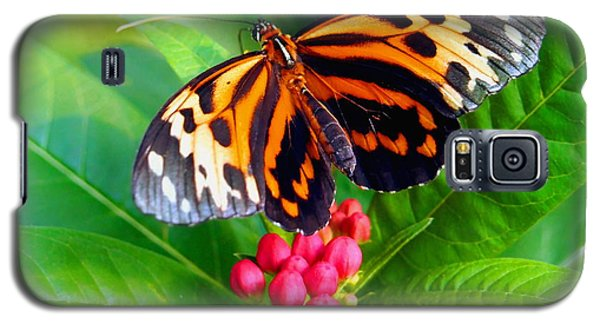 Common Tiger Glassywing Butterfly Galaxy S5 Case by Amy McDaniel