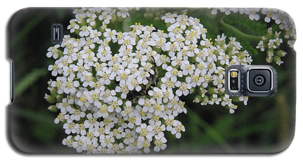 Common Yarrow Closeup Galaxy S5 Case by Robyn Stacey