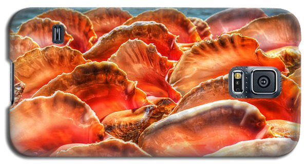 Conch Parade Galaxy S5 Case by Jeremy Lavender Photography