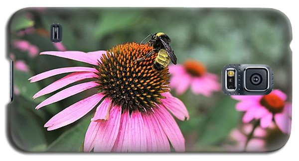 Cone Flowers And Bee Galaxy S5 Case by Sheila Brown