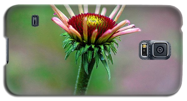 Coneflower Bloom Galaxy S5 Case by Lisa L Silva