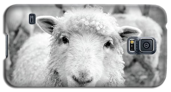 Sheep Galaxy S5 Case - Contentment by Pixabay