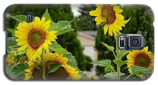Conversing Sunflowers Galaxy S5 Case
