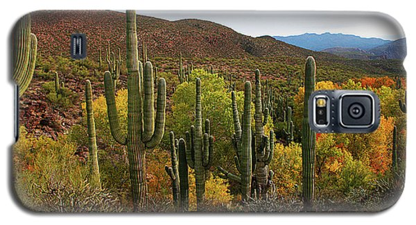 Coon Creek With Saguaros And Cottonwood, Ash, Sycamore Trees With Fall Colors Galaxy S5 Case by Tom Janca