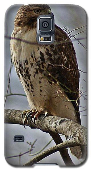 Cooper's Hawk 2 Galaxy S5 Case by Joe Faherty