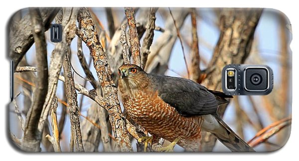 Galaxy S5 Case featuring the photograph Cooper's Hawk by Donna Kennedy