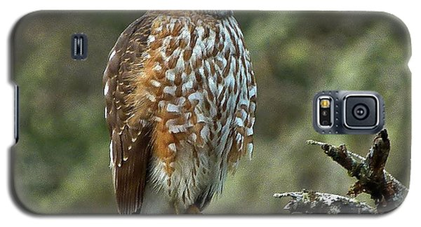Coopers Hawk Galaxy S5 Case