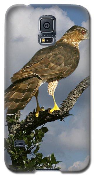 Cooper's Hawk On Watch Galaxy S5 Case