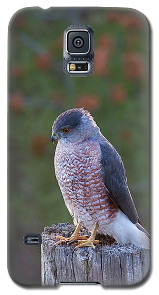 Coopers Hawk Perched Galaxy S5 Case