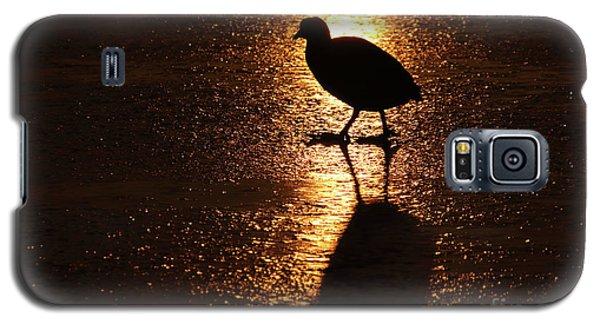 Coot Walks On Golden Ice  Galaxy S5 Case