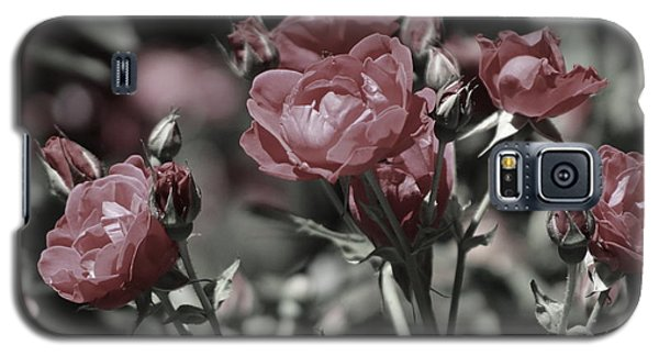 Copper Rouge Rose In Almost Black And White Galaxy S5 Case