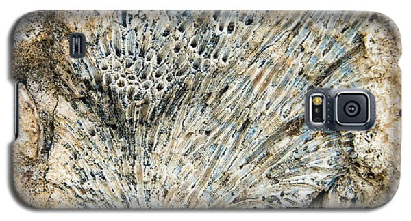 Galaxy S5 Case featuring the photograph Coral Fossil by Jean Noren