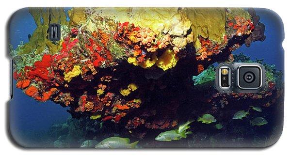 Coral Reef Scene, Calf Rock, Virgin Islands Galaxy S5 Case